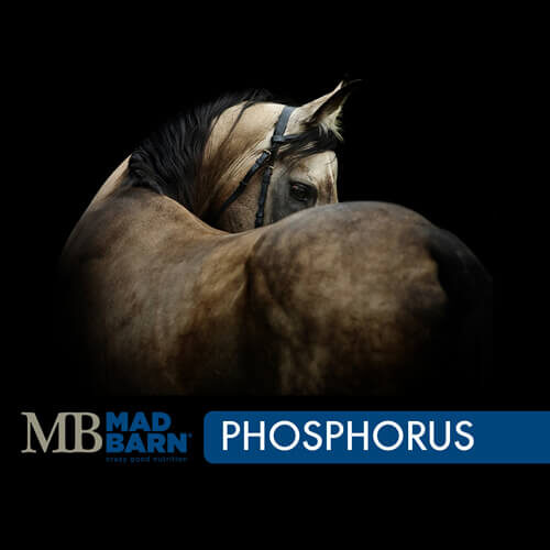 Bulk Monosodium Phosphate Equine Supplement