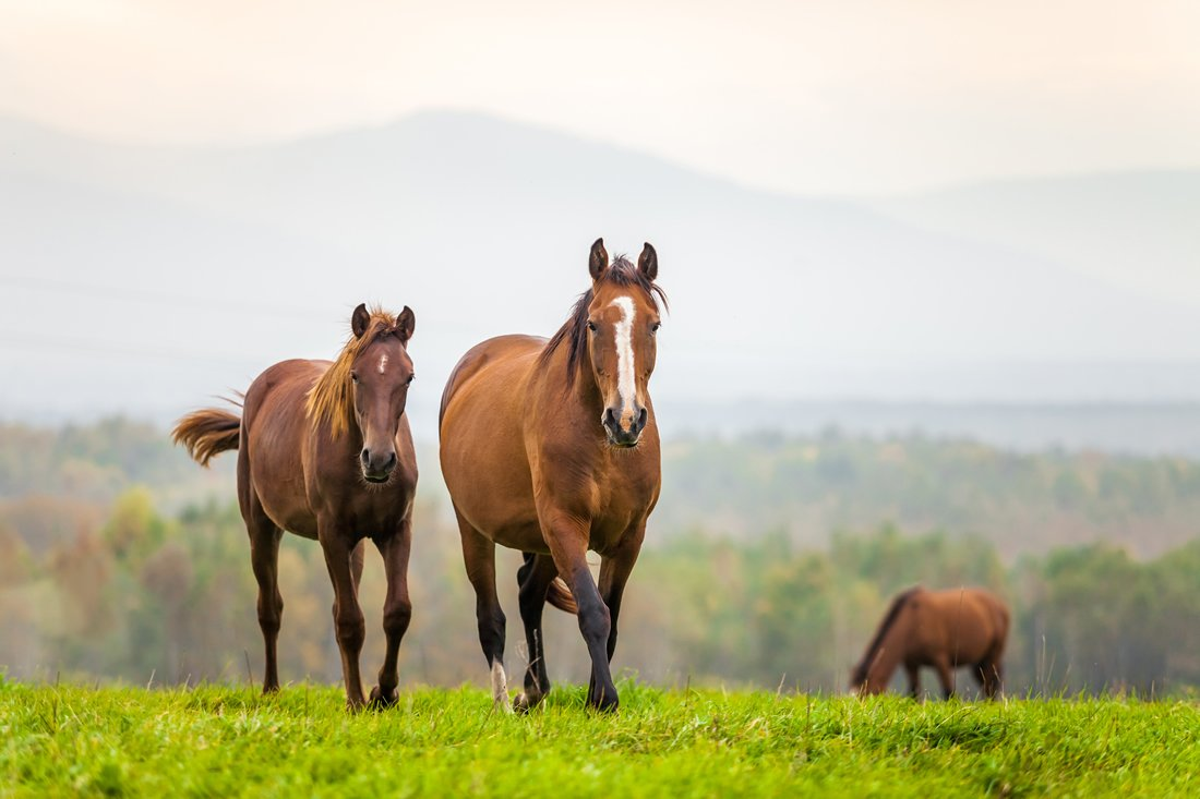 Vitamin E Benefits for Horses