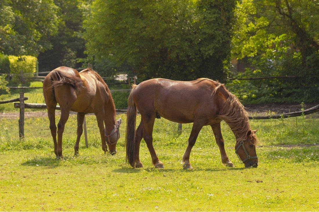 6 Research-Backed Benefits of Chasteberry in Horses