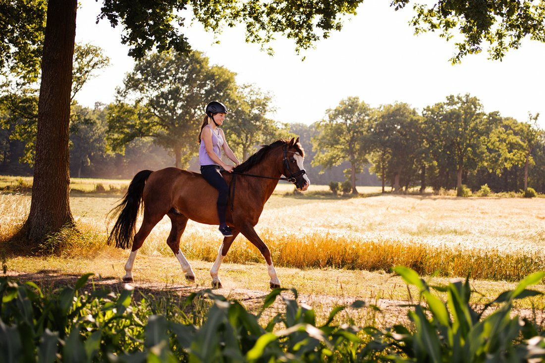 Omega-3 Benefits for Horses