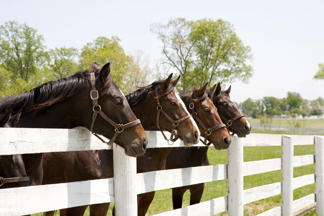 10 Science-Backed Benefits of Copper for Horses