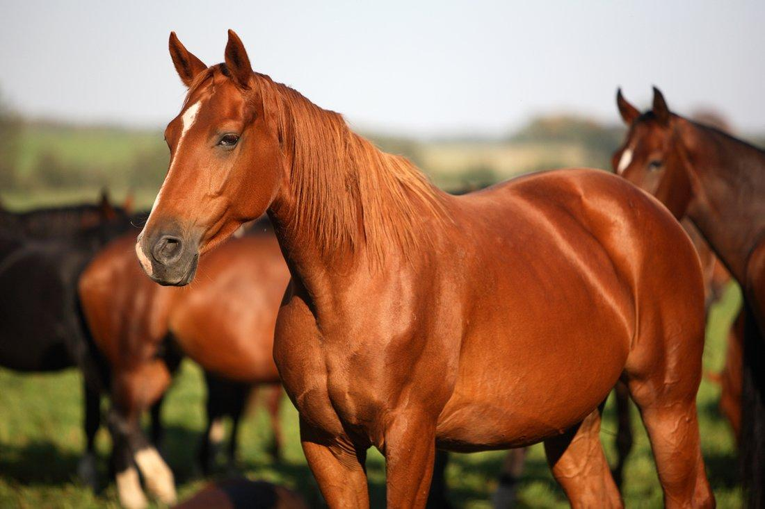 Lysine, Methionine & Threonine for Horses