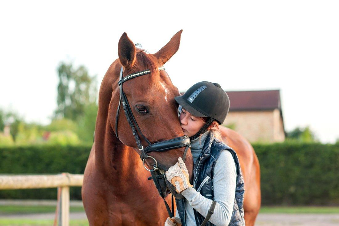 Ulcer Supplements for Horses